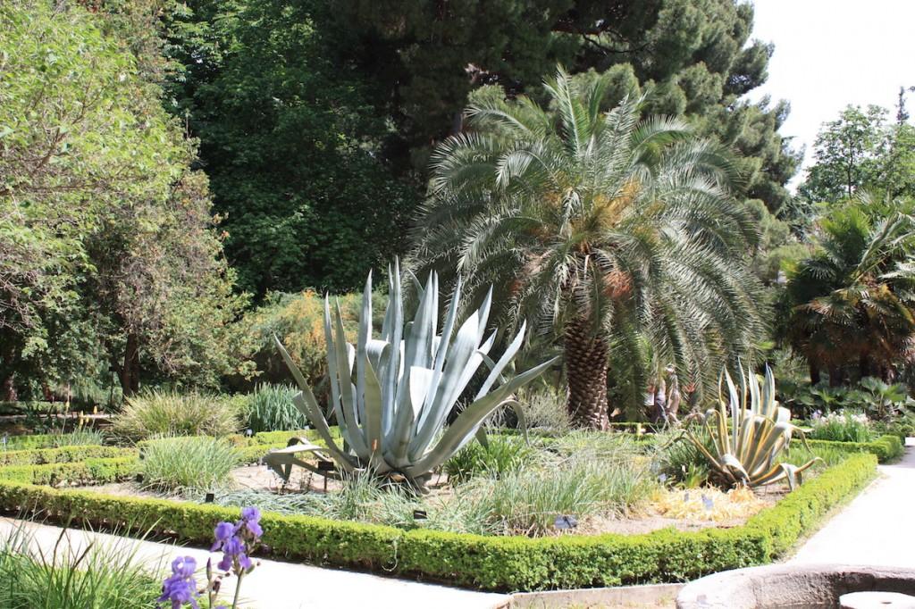 Agave - Jardin Botanique - Madrid