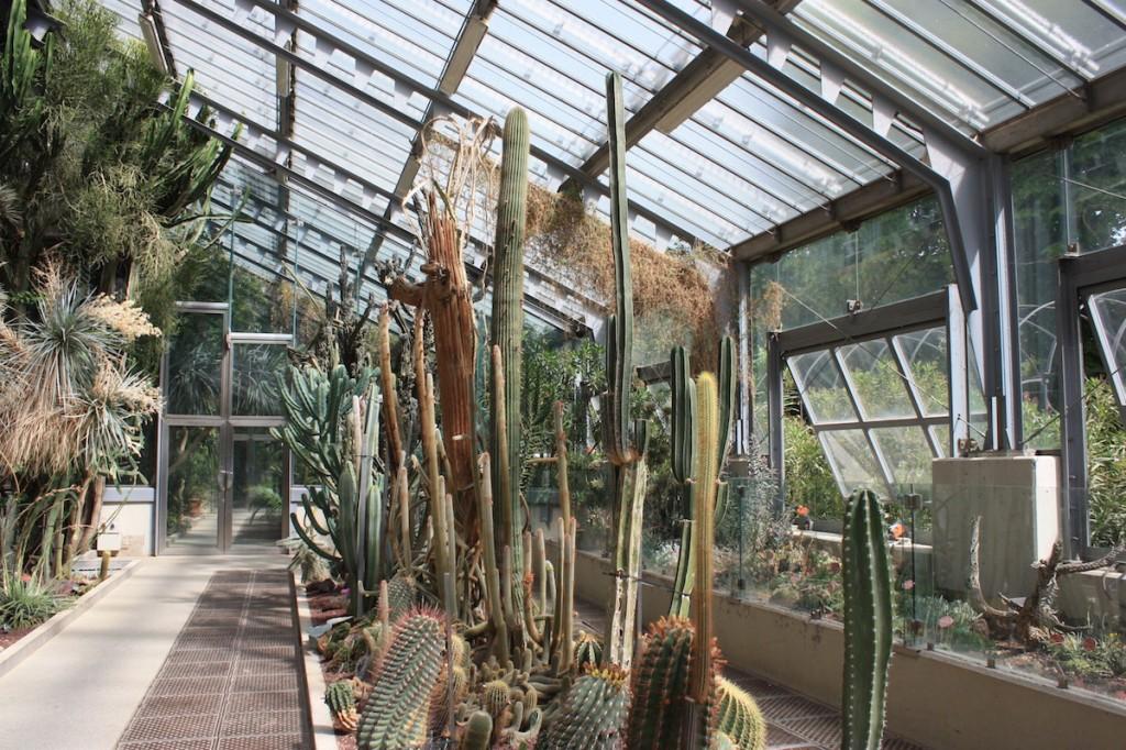 Cactus - Jardin Botanique - Madrid